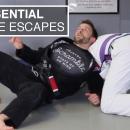 Essential Turtle Escapes